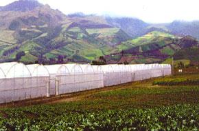 سازه گلخانه